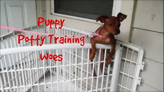 Puppy Potty Training Woes [life With Tammia Vlog 29]