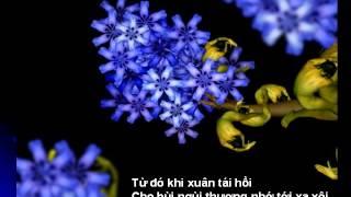Khúc hát thanh xuân - Johann Strauss - Ái Vân