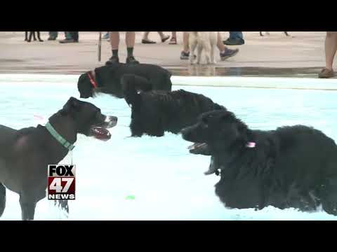 Local pool to close out season with doggie swim