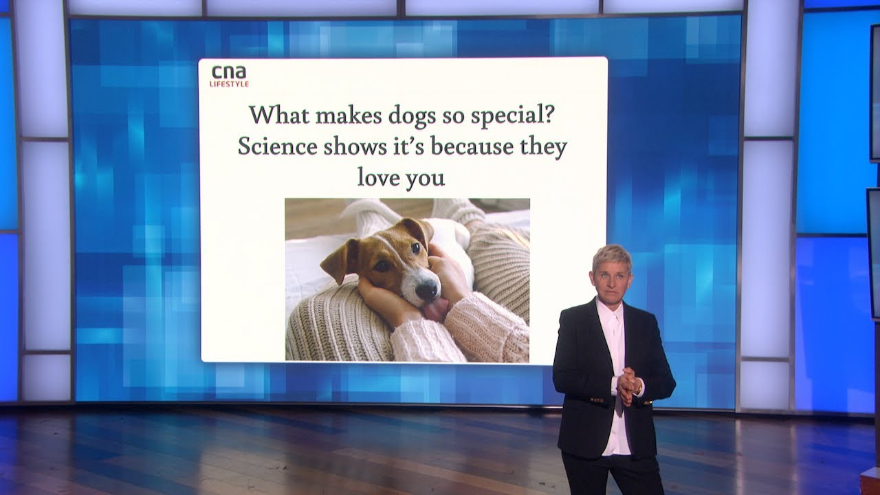 Scientific Proof Dogs Love Us