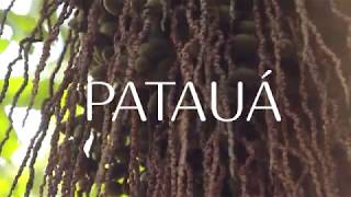 Ekos Patauá