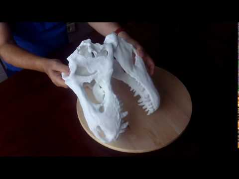Tyrannosaurus Rex.3D printing.