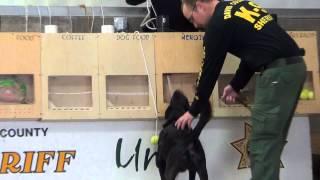 Davis County Sheriff K9 Mojo Training on Heroin 1