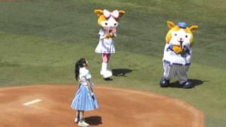 横浜スタジアムでの千眼美子(本名清水富美加)さんの始球式です。がっか...