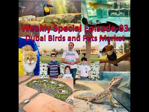 Birds and Pets market -UAE, Dubai ll Best Place To Visit