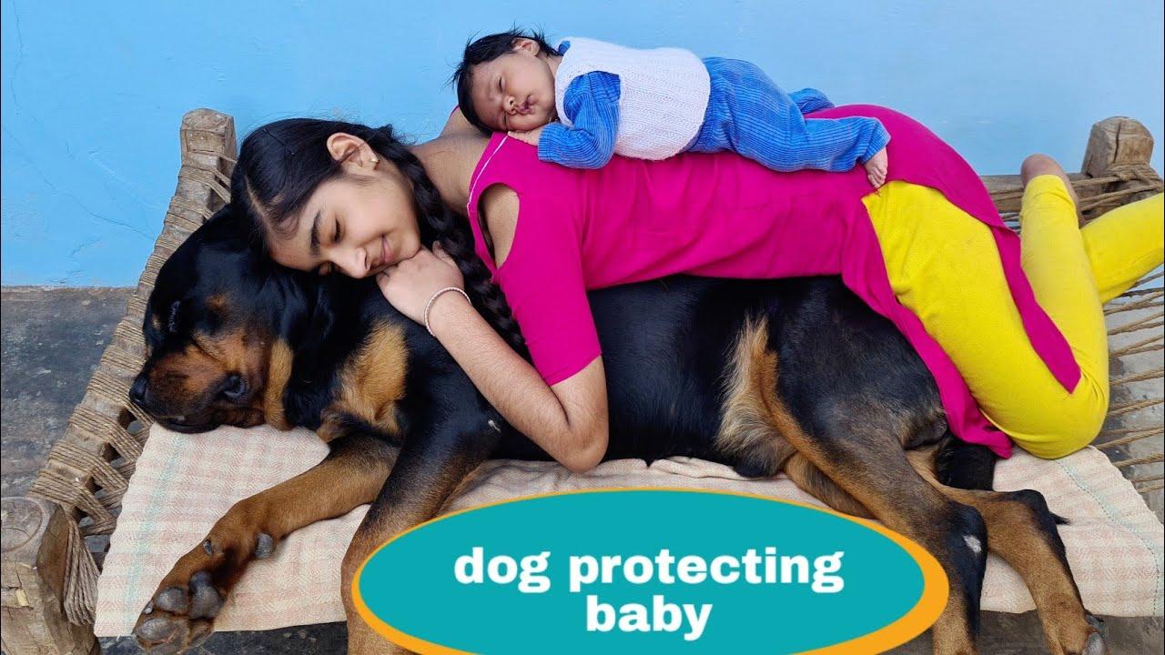 Dog is protecting my baby||Gurad dog||Rottweiler dog.
