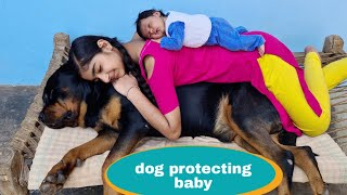 Dog is protecting my baby||Gurad dog||Rottweiler dog.