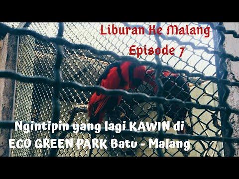 koleksi-burung-terbesar-dan-terlengkap-di-indonesia?-ada-di-eco-green-park-jatim-park-2-batu-malang