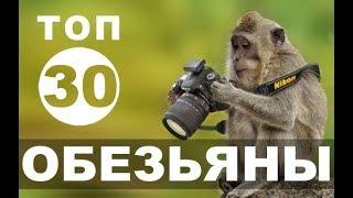 Смешные обезьяны   приколы топ-30