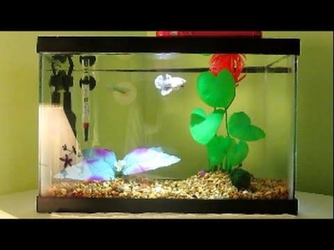 Betta fish care youtube for How to take care of beta fish