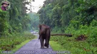 Elephant Chasing (India's Best.)