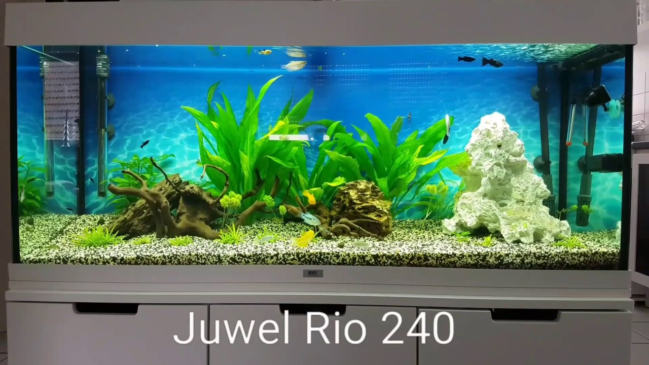 juwel rio 240 wei white eheim professionel 4 250 eheim thermocontrol youtube. Black Bedroom Furniture Sets. Home Design Ideas