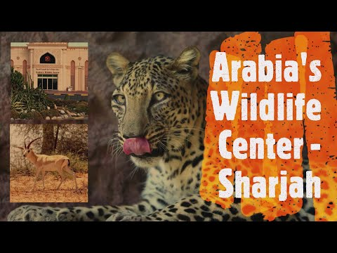Arabia's Wildlife Center in Sharjah Desert park #UAE Explori