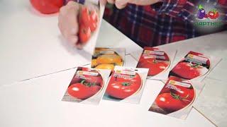 Как вырастить рассаду томатов. Часть 1
