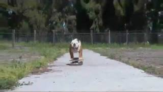 Surfin´ Bulldog (Beach Boys - Surfin´ USA)
