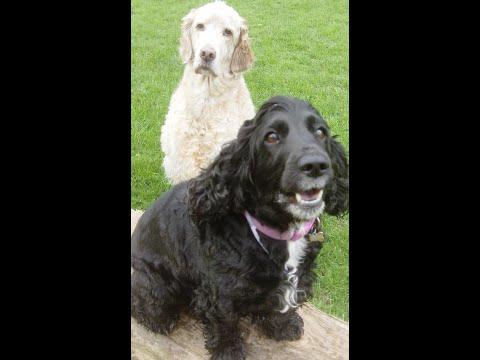 Bichon, Bull Terrier,  Cocker Spaniel, English Setter & Yorkshire Terrier chilling.