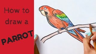How to Draw a Parrot - Scarlet Macaw