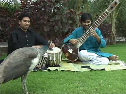 Peacock wants to be a tabla and sitar maestro musician!! Purbayan Chatterjee & Satyajit Tawalkar