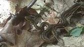 e74de44fe402 Ged Dodd Metal Detecting UK (52) - Medieval Oxen Shoe - YouTube