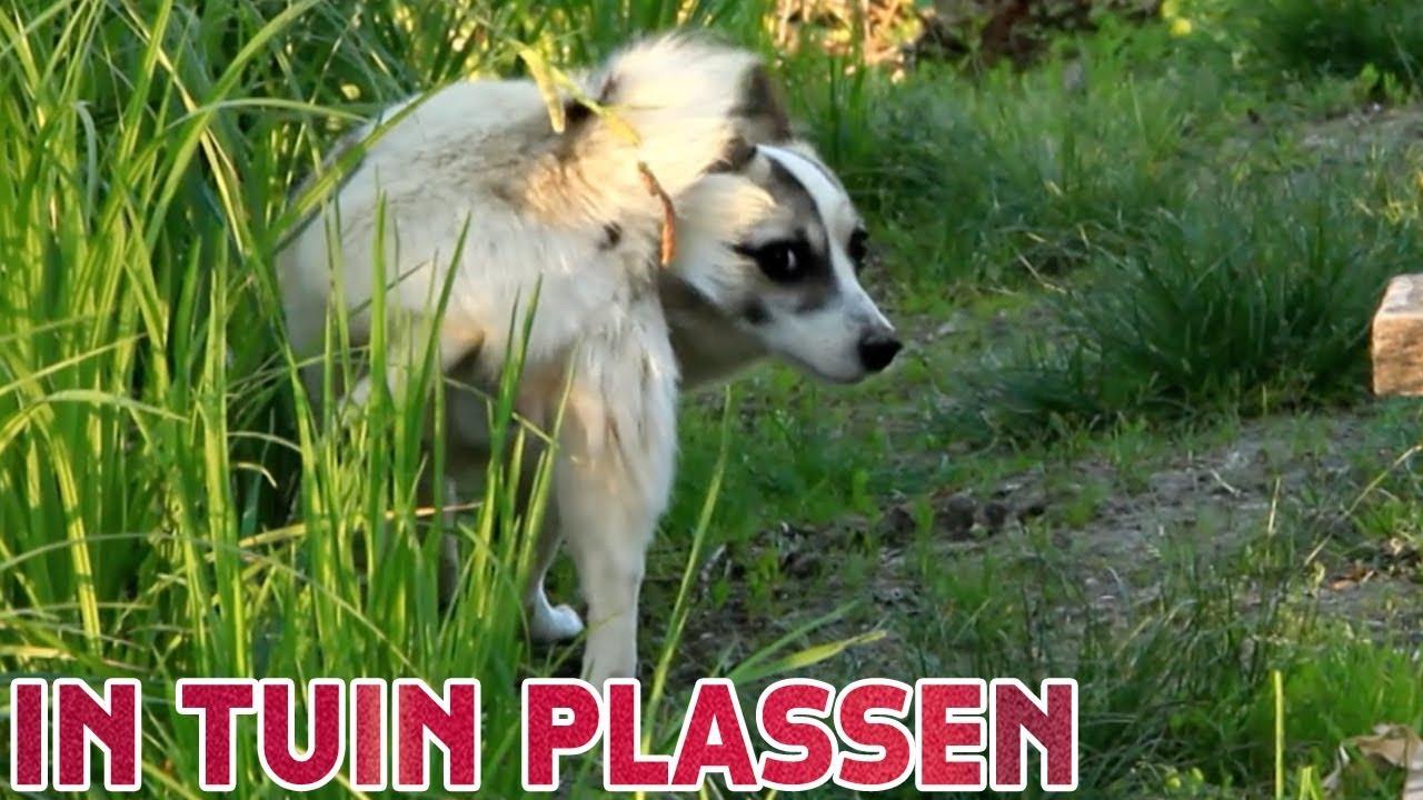 Hondenpoep In Tuin : Plas in tuin tegen hondenpoep stemronde studio snugger youtube