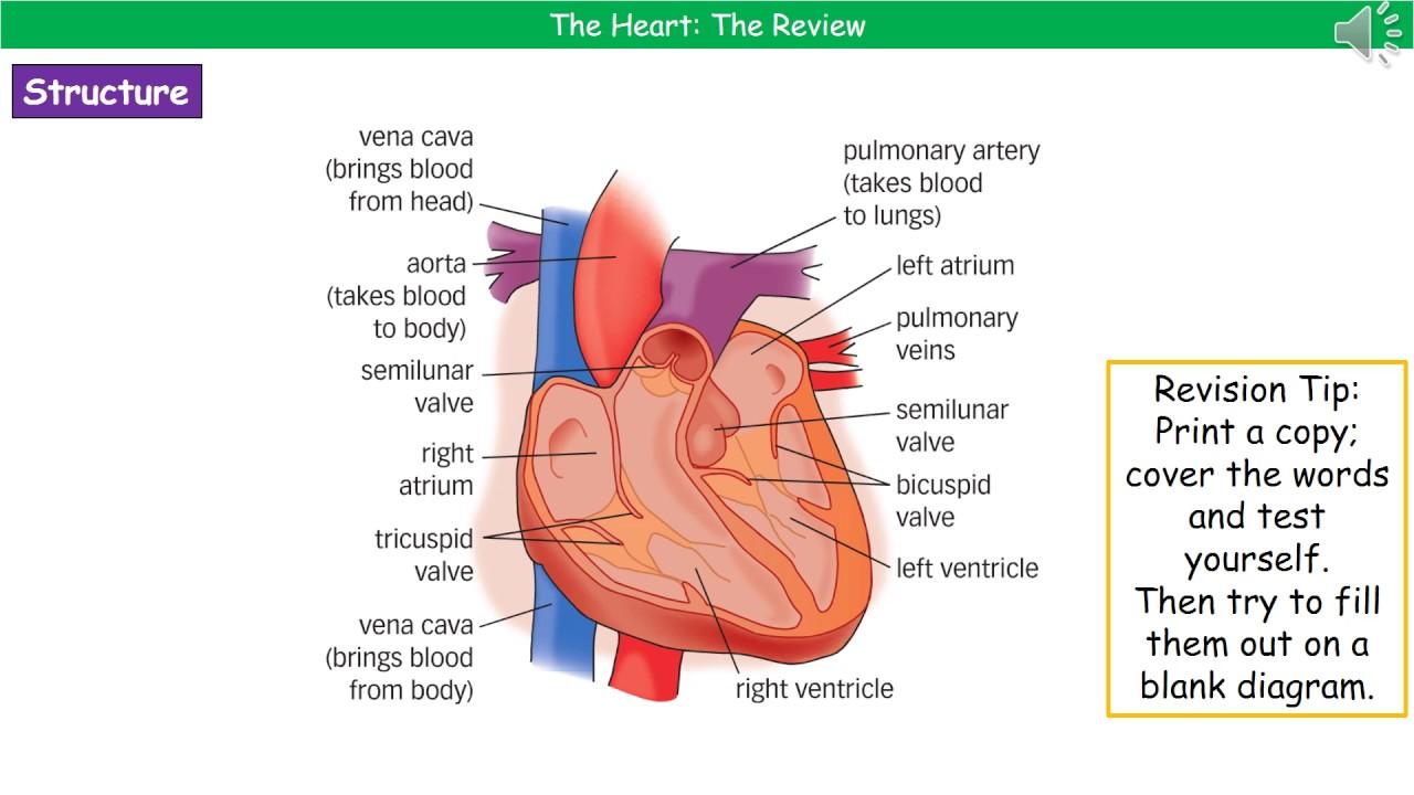 Ocr gateway a b223b heart summary youtube ocr gateway a b223b heart summary ccuart Gallery