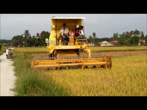 Mesin Padi 1545 S Menuai Padi Di Padang Cempedak Ahad 100716