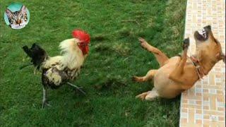 Chicken Wants To Bite Dog🐔🐶 - Funniest Animals Videos | Amazing Animals