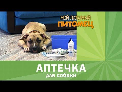 Аптечка для собаки. Обязательный минимум.