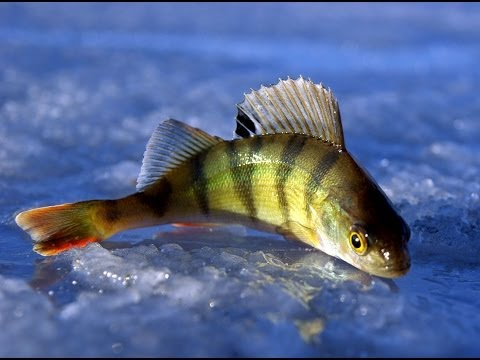 Все видео о рыбалке