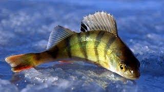 Секреты зимней рыбалки видео Зимняя ловля 2016 Смотреть рыбалка онлайн Зимняя рыбалка Зимняя ловля в