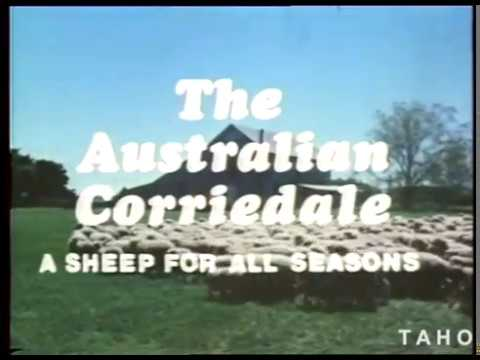 Australian Corriedale: A Sheep For All Seasons (1980)