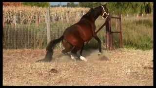 prostatitis és ló gesztenye