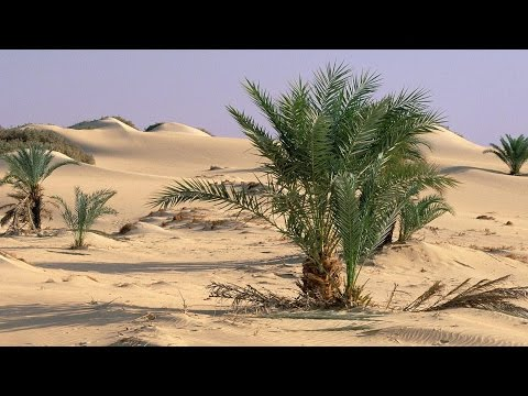 Middle Eastern Music Instrumental - Palm Sanctuary