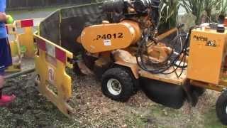 Tree Stump Removal in Lancashire