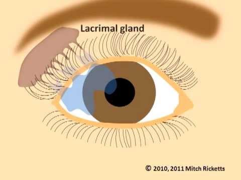 Eye Anatomy Eyes And Vision Part 1 V2 Newest Version Youtube