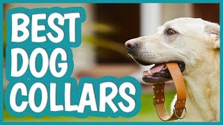 Best Dog Collar in 2019 | TOP 8 Dog Collars