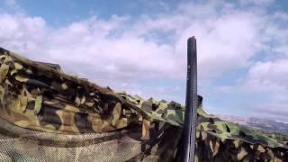 Ouverture de la chasse à la palombe (pigeon) saison 2015-16 Act2