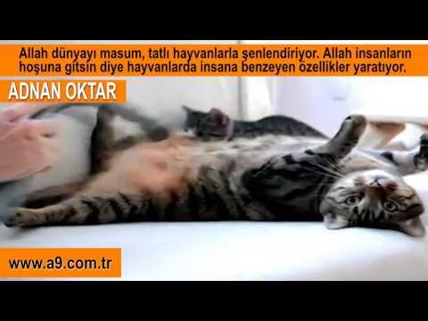 A9 TV SEVİMLİ CANLILAR