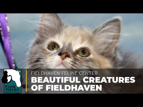 Video by Randy F - FieldHaven Volunteer
