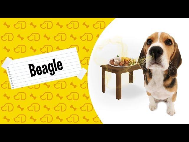 Fatos Sobre o BEAGLE!