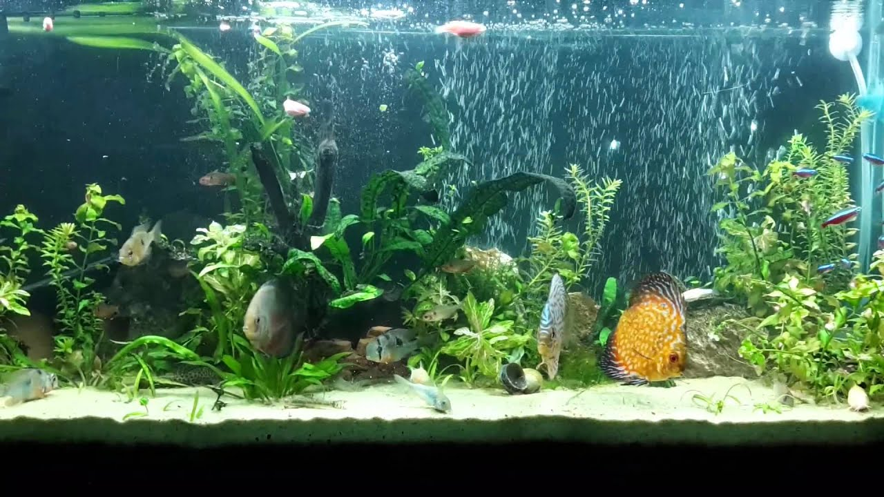 Remodelaci n de acuario cortina de burbujas youtube - Pecera de pared ...