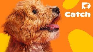 DOGTV Stimulation: Park Life in San Francisco