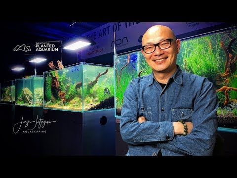 Learn how to aquascape from IAPLC Winner - Dave Chow