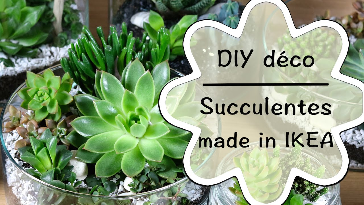 diy cr er une d coration de succulentes tutoriel. Black Bedroom Furniture Sets. Home Design Ideas