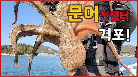 격포에서 문어낚시 마릿수로 잡으면 너무 힘들어요.../Octopus fishing