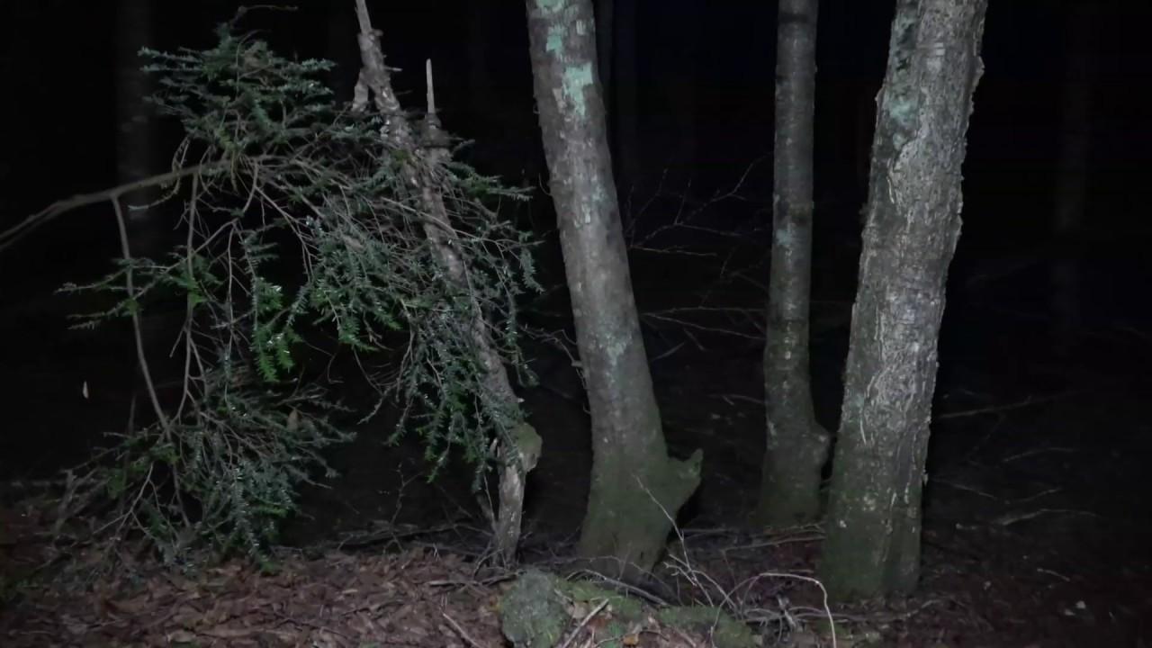 Aokigahara Night Walk  (Beyond the Ropes)