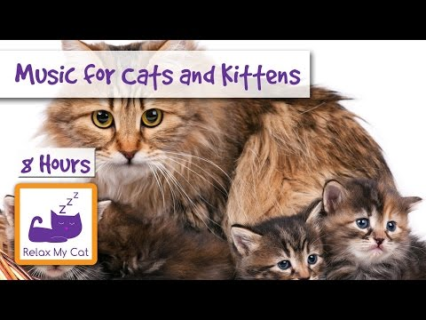 8 HOURS of Relaxing Music for Cats and Kittens!