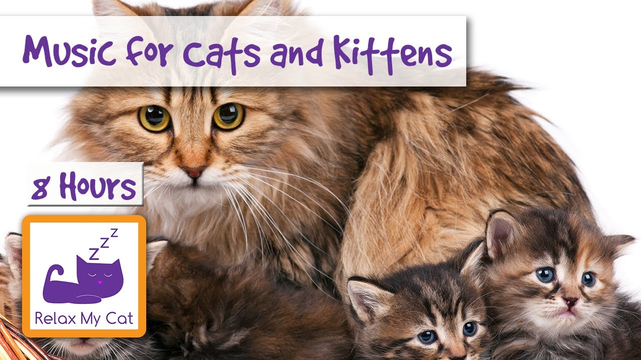 8 Hours Of Relaxing Music For Cats And Kittens Youtube