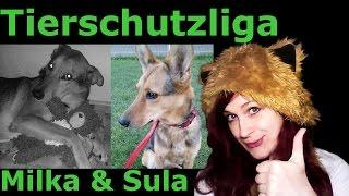 Mal ganz unter uns | [VLOG] -  #002 Meine Hunde aus dem Tierschutz
