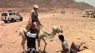 Снимите меня с верблюда...!